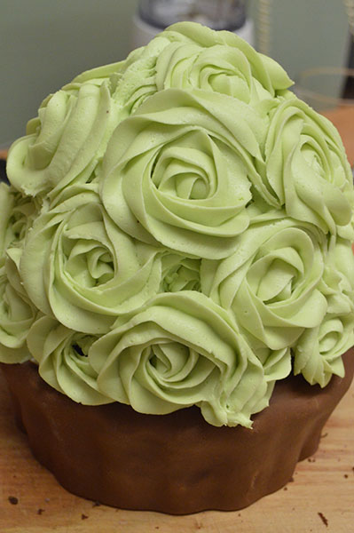 Buttercream-Rosebush