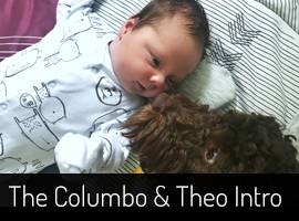 Introducing a dog and a newborn baby