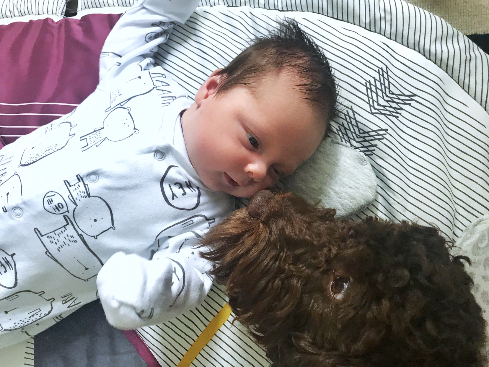 Introducing a baby to a dog